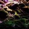Astrobal - Australasie (feat. Laetitia Sadier)