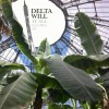 Delta Will - It All Glows EP