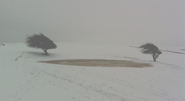 Grasscut - Snowdown